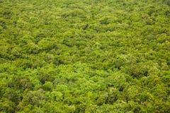 Textura y fondo de la opinión superior de la selva tropical Imágenes de archivo libres de regalías