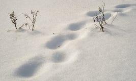 Textura y pasos en la nieve imágenes de archivo libres de regalías