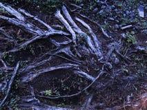 Textura y tierra de madera fotos de archivo libres de regalías