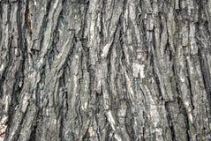 Texturad дерева Стоковые Фотографии RF