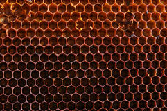 Textural background from bee honeycombs Royalty Free Stock Photo