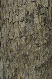 Textural detail of tree bark Stock Photo