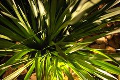 Textural, gröna och rena växtsidor över trädgården royaltyfria foton