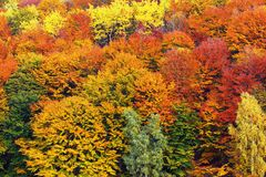 Textural image of autumn foliage. Beautiful colors of the forest in late october Royalty Free Stock Photos