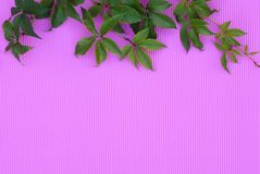 Textural pink background with green leaves. stock photo
