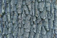 Textural tło, barkentyna akacja zdjęcie stock