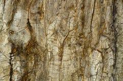 Beautiful textural tree bark close-up royalty free stock photography
