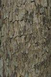 textural tree för skälldetalj Arkivfoto