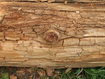 Textural trunk Stock Photos