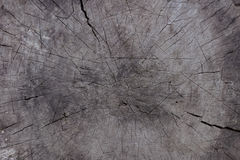 Textural wooden. Old background in cracks Stock Image