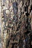 texturas foto de archivo