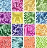 Texturas coloridas da pele da zebra Foto de Stock Royalty Free