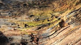 Texturas coloridas de madeiras velhas imagens de stock