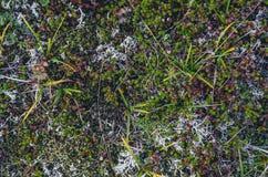 Texturas coloridas do musgo Fotos de Stock