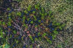 Texturas coloridas do musgo Foto de Stock Royalty Free