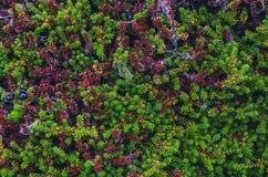 Texturas coloridas do musgo Fotos de Stock Royalty Free