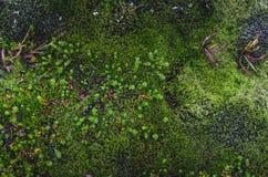 Texturas coloridas do musgo Fotografia de Stock Royalty Free