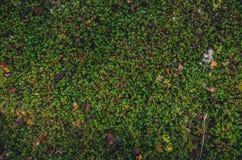 Texturas coloridas do musgo Imagem de Stock
