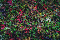 Texturas coloridas do musgo Imagens de Stock Royalty Free