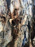 Texturas corroídas da rocha fotografia de stock