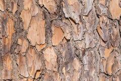 Texturas da casca de árvore foto de stock