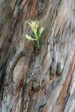 Texturas da casca de árvore fotografia de stock