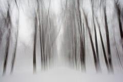 Texturas da floresta da neve em preto e branco foto de stock