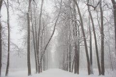 Texturas da floresta da neve em preto e branco fotografia de stock royalty free