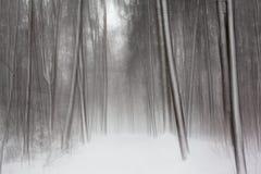 Texturas da floresta da neve em preto e branco imagens de stock