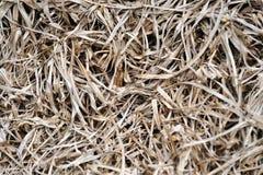 Texturas da grama secada Fotos de Stock Royalty Free