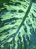 Texturas da natureza Imagens de Stock Royalty Free