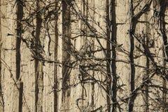 Texturas da parede e bushropes secados imagens de stock