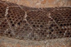 Texturas da pele de serpente A serpente de Brown escala o fundo com listras brancas fotografia de stock royalty free