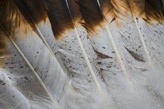Texturas da pena do nativo americano Imagens de Stock