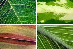 Texturas das folhas Fotografia de Stock