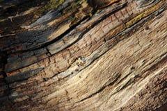 Texturas de Cracken de madeiras velhas fotografia de stock royalty free