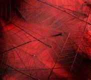Texturas de la hoja foto de archivo