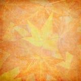 Texturas de la hoja de la caída Fotografía de archivo libre de regalías