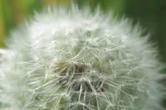 Texturas de la primavera Imagen de archivo