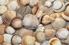 Texturas de las cáscaras del mar Fotografía de archivo