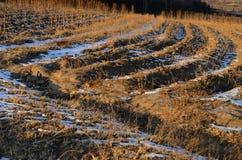 Texturas de los campos en invierno Fotografía de archivo