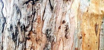 Texturas de madera fotografía de archivo libre de regalías