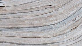 Texturas de madera Fotos de archivo libres de regalías