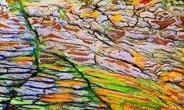 Texturas de madera de tronco de árbol Foto de archivo libre de regalías