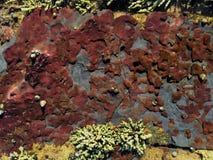 Texturas de marea tonales fotos de archivo
