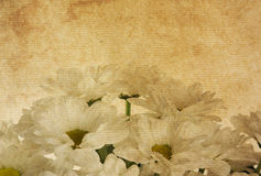 Texturas de papel da flor. Foto de Stock