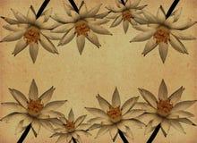 Texturas de papel de la vendimia con las flores de loto Fotos de archivo libres de regalías