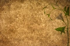 Texturas de papel velhas com planta verde imagens de stock