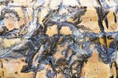 Texturas de piedra de la abadía de Whitby Imágenes de archivo libres de regalías