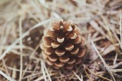 Texturas de Pinecone Fotografía de archivo libre de regalías